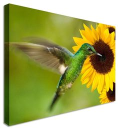 Humming Bird by Animal Art Canvas Printers, Canvas Art Cheap Prints by www.canvastown.co.uk