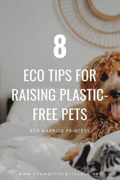 Plastic Free July, Warrior Princess, Mindful Living, Sustainable Living, Zero Waste, Sustainability, Environment, Pets, Socialism