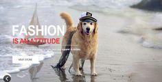 Consigli di una Mamma Casalinga: What Is iCEO Dog?