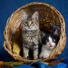 .Kittens