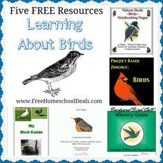 Five Free Resources to Learn About Birds