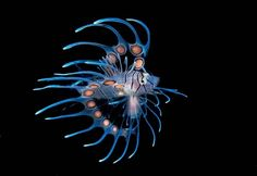 """The winner of the first place in the """"Fish or Marine Life Portrait"""" category, a juvenile lionfish by Florida photographer Steven Kovacsis, captured on his camera during a night dive in Roatan, Honduras."""