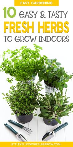 Growing your own indoor herb garden is easier than you think. Even if you have a black thumb, you can easily grow your own herbs indoors on a simply sunny window sill and have fresh herbs anytime to y Herb Garden In Kitchen, Diy Herb Garden, Easy Garden, Indoor Garden, Outdoor Gardens, Garden Ideas, Window Herb Gardens, Indoor Herbs, Vegetable Garden