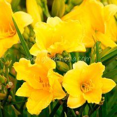5 ways gardening beats global warming! (with images) · Gardenesia Winter Flowers, Summer Flowers, Unusual Flowers, Pretty Flowers, Monrovia Nursery, Online Plant Nursery, Monrovia Plants, Best Perennials, Sun Loving Plants
