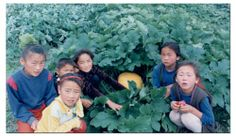 In Mongolia, community-grown vegetables fill a big nutritional gap   One Country