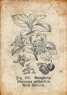 Vintage botanique floral plantes vieux papier dessin lot
