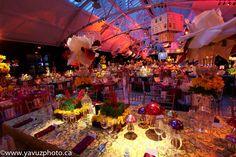Photos - The Daffodill Ball - Le Bal de la Jonquille