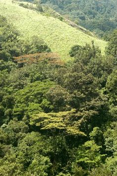 Declared a National Park in 1984, Silent Valley in Palakkad in Kerala is one of the richest, most threatened and least studied forest tracts in India. The new proposed Pathrakkadavu hydroelectric project has sent fresh tremors among environmentalists. A file photo: K. K. Mustafah.