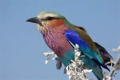 images of brightly colored birds - Bing images