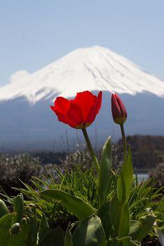 Mount Fuji, Lake Kawaguchi | Yamanashi, Japan | UFOREA.org | The trip you want. The help they need.