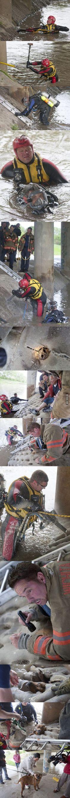 Amazing dog rescue and  Fe en la humanidad restaurada
