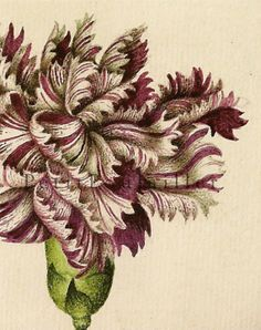 Gorgeous botanical, reprinted in 2000 & taken from the original 17th century English masterpiece, 'Florilegium' by self-taught artist Alexander Marshal, 1620-1682.