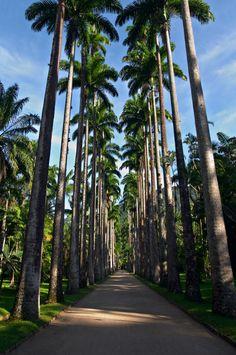 O Jardim Botânico do Rio abriga alguns dos principais exemplares da flora brasileira e mundial. Não deixa de visitar.