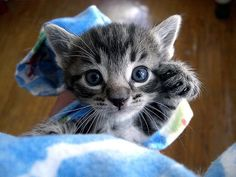 I want a little kitten