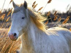 32 places everyone should visit in France | Business Insider = a white horse in the Camargue near Arles