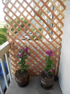 Create a beautiful private balcony by using some lattice wood and your favorite climbing plant. Fuschia Bougainvilla was used here and will eventually consume the wood area. Love this!