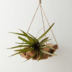 Sphere Hanging Basket $48 http://www.shopterrain.com/garden-fresh-blooms/giant-tillandsia-medium