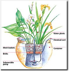 Pond plants for container water gardens. When it comes to pond plants for your container water garden, there's a lot of choice. Plants suitable for water gardens, containers or ponds, are readily available at well-stocked garden centers.         These plants are easy to grow and need little maintenance, aside from occasional cutting away of yellowing foliage or spent flowers.