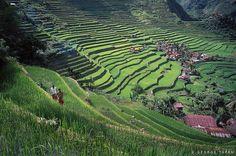 Banaue Rice Terraces by Guide Viaggi, via Flickr
