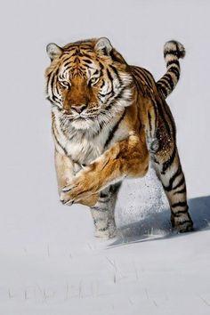 """Snow Chase.... | by Paul Keates."" #amazing #beautiful"