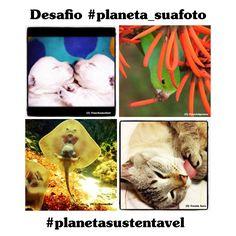 E os prêmios do desafio #planeta_suafoto vão para... http://abr.io/5MqS