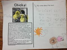 Little Bird Kindergarten: Close Reading with writing responses, they can do it!