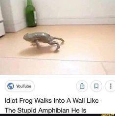 Idiot frog walks into a wall like the stupid amphibian he is. Stupid Memes, Dankest Memes, Funny Memes, Hilarious, Animal Memes, Funny Animals, Frog Pictures, Youtube I, Clean Memes