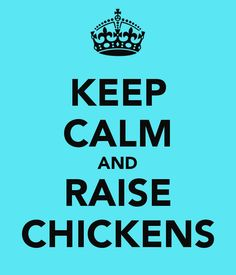KEEP CALM AND RAISE CHICKENS