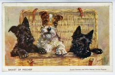 Mabel Gear.  Great Dog and Terrier Postcard art from first half of the 20th century.  I have many (including this one!)