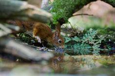 Fotograaf: Ronald de Witte Fotowedstrijd Natuurmonumenten