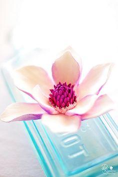 gumpaste magnolia