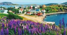 10 Cute Towns In Newfoundland That Are Definitely Worth The Road Trip - Narcity Newfoundland Canada, Newfoundland And Labrador, Seaside Towns, Adventure Tours, Adventure Time, Adventure Is Out There, Go Camping, Small Towns, Cool Places To Visit