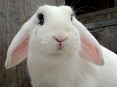 #white #bunny #blue #eyes #ears #camera #sony