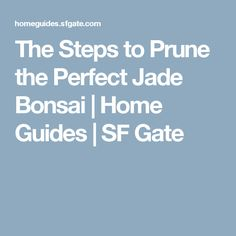 The Steps to Prune the Perfect Jade Bonsai | Home Guides | SF Gate