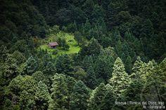 Bosque Mineral del Chico, Hidalgo- Google Search