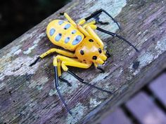 ɛïɜ Eight Spotted Crab Spider ɛïɜ