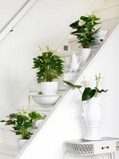 10 Stylingideeën voor Anthurium http://www.interieurinspiratie.nl/bloemen-met-een-hart/ Meer wooninspiratie op mijn interieurblog vol interieurinspiratie.