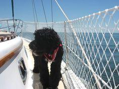 lifeline netting | Lifeline Safety Netting Installation - SailNet Community