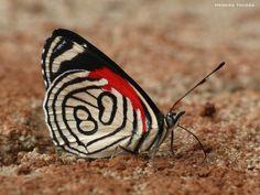 mariposas en misiones -