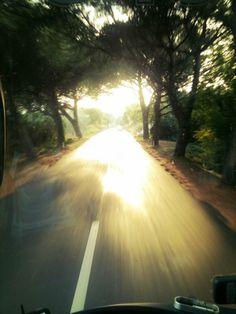 Unterwegs auf der Straße von Koper nach Izola. Schirmpinien, Abendsonne. Ankommen. Erden. #PortorozLive Country Roads, Pine Tree
