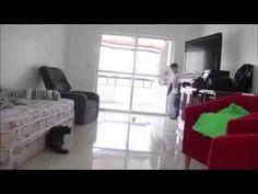 El gato Taffarel causa sensación en internet | Gatos domésticos