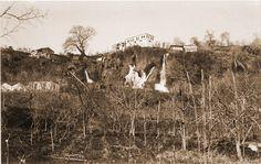 1917, Edessa Macedonia Hellas
