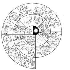 milions d'anys. Aquesta roda explica la teoria de l'evolució del científic anglès Charles Darwin . Nom: Science For Kids, Science And Nature, Frise Chrono, Prehistoric Age, Montessori Elementary, Teaching History, Home Schooling, Social Science, Primary School