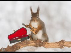 I Shoot Squirrels With Tiny Musical Instruments Through My Kitchen Window | Bored Panda