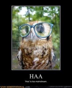indie owl