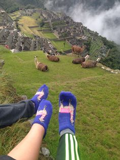 Machu Picchu June 2015 Peru Llamas! :))