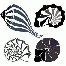 This is a set of four stylized sea shell design elements.