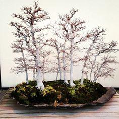 Autumn Bonsai Forest. I love bonsai trees. Please check out my website thanks. www.photopix.co.nz