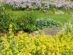 Tarha-alpi antaa aurinkoista väriä puutarhaan