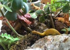 Dinosaurs roaming the miniature gardens Talking Animals, Fairy Princesses, Miniature Fairy Gardens, Dinosaurs, Miniatures, Diy Projects, Handyman Projects, Handmade Crafts, Diy Crafts